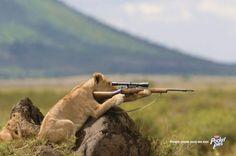 Hunter hunted!
