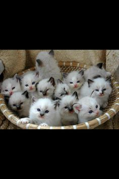 Bunch of kittens and I want one of them!!!
