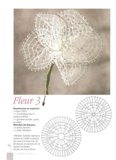Цветы - Аня Журавлева - Picasa Web Albums