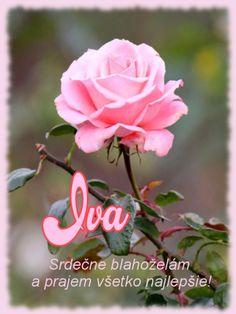 meninové priania December, Rose, Flowers, Plants, Pink, Plant, Roses, Royal Icing Flowers, Flower