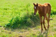 Caring for young horses