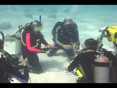 Restoring Coral Reefs in the Florida Keys and US Virgin Islands