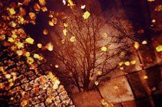 Fotografia analógica em Estocolmo por Jorge Sato. | Analog photography in Stockholm by Jorge Sato.
