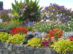 Flowers along the Inner Harbor.