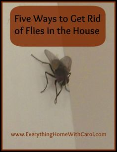 Five ways to get rid of flies in the house.