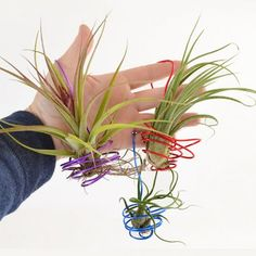 Great for bringing a little nature in, these DIY hanging air plants are simple, inexpensive and could make great little gifts!