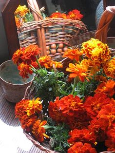 Autumn Marigold Still Life