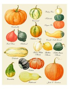 Autumn Leaves Print Leaf Varieties Types of Leaves Seeds Fall Colors Harvest Leaf Chart Thanksgiving Halloween October Hostess Pumpkin Varieties, Mushroom Varieties, Squash Varieties, Halloween Prints, Vintage Halloween, Fall Halloween, L Wallpaper, Pumpkin Art, Pumpkin Drawing