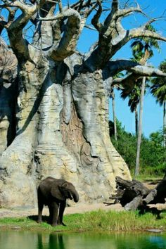 A giant baobab tree make the elephant look small . A giant baobab t Weird Trees, Baobab Tree, Unique Trees, Old Trees, Tree Forest, Tree Art, Tree Of Life, Amazing Nature, Scenery