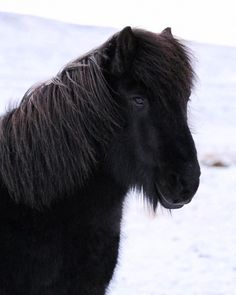 "648 gilla-markeringar, 10 kommentarer - ♡ICELANDIC HORSES♡ (@mystery.horses) på Instagram: ""The other day I witnessed something horrifying... and it's not for the first time. A woman had…"""