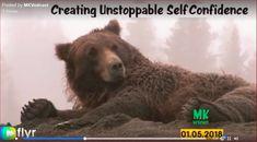 Self Confidence, Brown Bear, Entrepreneur, Animals, Animales, Animaux, Confidence, Animal, Self Esteem