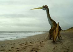 #Quetzalcoatlus Getting Ready to Take Flight on a Ancient Beach, During the the Maastrichtian stage, in What is Now part of North America | Photoshop by Johnson Mortimer Il - Flying Monsters 3D.