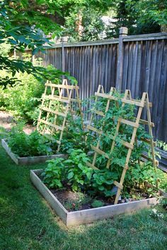 Vegetable Gardens Vegetable Garden Vegetable Gardening Vegetable Garden Vegetable Garden Garden design Gardening Gardening for beginners Gardening in pots Vegetable Gardens to plant vegetable garden Jenny Steffens Hobick: Our Garden Tour Backyard Vegetable Gardens, Veg Garden, Vegetable Garden Design, Garden Trellis, Summer Garden, Indoor Garden, Outdoor Gardens, Garden Plants, Diy Trellis