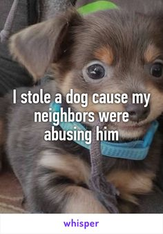 10 Completely Insane Laws Involving Animals Id call the police on them and Id take the dog in and take care of him.