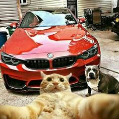 Bmw#No Fear#Selfie :P