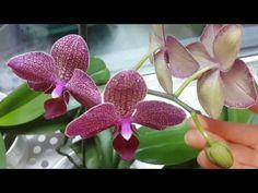 Освещение для орхидей. Отличный результат спустя всего месяц. Light for orchids - YouTube