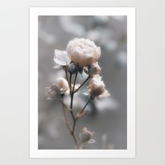 Bokehlicious Rose Art Print by Originalaufnahme - $18.00  #posters #artworks #graphic design #texture #inspiration #artists #stretched canvas #illustrations #room #products #pretty #colour #inspiration #Wall Art #Home Decor #Throw Pillows #Cards #Mugs #Shower Curtains #Wall Tapestries#Duvet Covers #Rugs #Wall Clocks #Art Prints #Framed Art Prints #Canvas Prints #Editions #Wall Tapestries