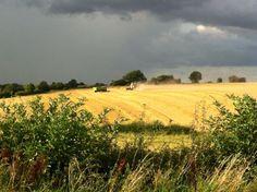 English harvest, Hertfordshire