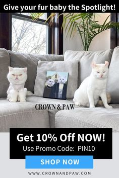 Give your beloved pet pride of place with a completely one of a kind pet portrait.   pet products dog,house pet,oragami dog,dog accessories,pet odor,dog love quote,diy dog,puppy dog,little cats,puppy ideas,cute pets,adorable pets,diy dog memories,diy pet ideas dog,christmas dog,dog and cat treats,dog ids,dog stuff pet care,dog area,cats pets,pretty dog,pets ideas,love of a dog,pet products,dog life,perfect dog,cat and dog,pets funny,pet mes,dog door,dog tip,future pet,pet diy,pet dogs puppies Funny Animal Images, Cute Funny Animals, Cute Baby Animals, Kittens And Puppies, Cats And Kittens, Dog Tags Pet, Pet Pet, Pet Dogs, Dog Area