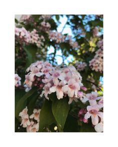 """flower overdose on Instagram: """"🌳 . . . . . . . . . . . . . . . . . . . . . #gardenflowers #beautifulflowers #flowers #flower #nature #garden #flowerpower #flowerlover…"""" Beautiful Flowers, Instagram, Garden, Nature, Plants, Garten, Naturaleza, Pretty Flowers, Gardens"""