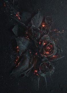 Untitled — socialpsychopathblr: Bouquet of burning roses by. Gothic Wallpaper, Retro Wallpaper, Dark Wallpaper, Black Rose Flower, Black Flowers, Rose Pictures, Pretty Pictures, Burning Rose, Aesthetic Roses