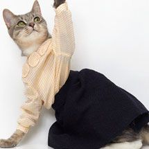 Japanese Fashion Designer United Bamboo Creates Cat Ready-To-Wear! ... see more at Inventorspot.com
