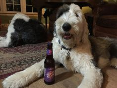 Dogs and Beer | Music, Dogs and Beer