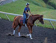 """@racing_future: @WiseDan_ galloped at #Keeneland on July 1, 2014 http://www.bloodhorse.com/horse-racing/articles/85953/wise-dan-continues-comeback-at-keeneland… #horseracing #WiseDan pic.twitter.com/bA8LwYFDbT"""