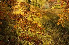 Credit: Christopher Page/PA Autumn Colour at Polesden Lacey, Surrey, by Christopher Page, winner of the Young Landscape Photographer of the ...