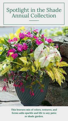 Plants For Planters, Flower Planters, Cool Plants, Flower Pots, Diy Flower, Shade Annuals, Plants That Love Shade, Shade Flowers, Annual Flowers For Shade