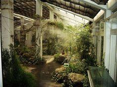indoor jungle | Found on bohemianwornest.tumblr.com