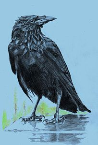 Crow Drawing - Crow, Blue Background by Richard Long