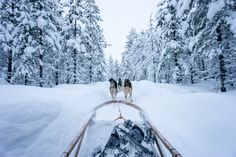 13 Reasons to Visit Finnish Lapland
