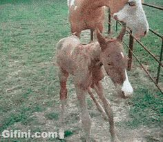 Funny Gif and LOL Gifs