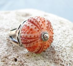 sea urchin ring