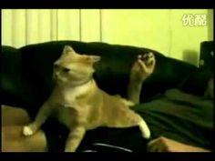 funny cat videos,funny cat video,funny cat videos.com,funny cat videos for kids,funny cat     and dog videos,funny cat videos you tube,funny dog and cat videos,very funny cat     videos,funny cat videos clips,free funny cat videos