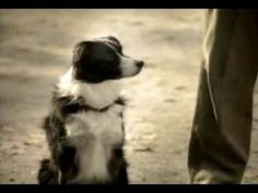"Budweiser Commercial - ""what can your dog do?"""