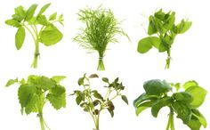 What to plant together (and what should not be planted together)...