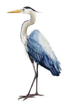 Seabird Heron I Canvas Art by Grace Popp My Canvas, Canvas Art Prints, Watercolor Bird, Watercolor Paintings, Watercolors, Bird Artwork, Guache, Coastal Art, Bird Illustration