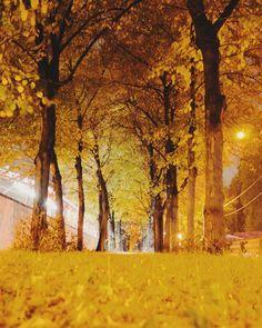 #киев #Київ #Kyiv #Kiev #instakiev #kiev_life #kievlife #kiev_of_the_day #kievgram #insta_kiev #instakiev #igerskiev #kievtoday #we_love_kiev #kievphoto #kievnow #kievviews#kievview#igerskiev #київвечірній #ukraine#Украина #україна#instaukraine#insta_ukraina #real_ukraine #photoukraine#igersukraine #igukraine  #contest_pxw @pixiework