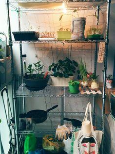 ベランダで菜園をやっています。写真はこのラックを買って組み立てた後のものです。 狭いスペースで育てられる野菜の数や種類には限界があると思ってました。それで考えたのがこのラックです。 ラックがあればいっぱいの野菜を育つこともできるし、ベランダも結構菜園ぽくになります。