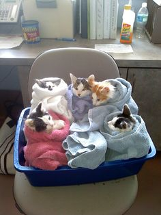 "roachpatrol: "" cuteness-daily: "" mintmayhem: ""  THE ONE IN THE WHITE TOWEL THOUGH "" Purritos "" PURRITOS """