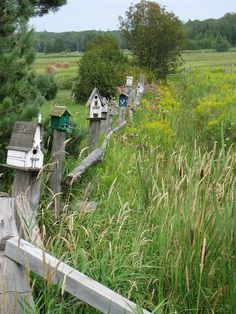 bird houses on fence posts