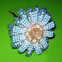 blau-weiße Perlenblume Zinnie