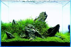 「hardscape aquarium」の画像検索結果