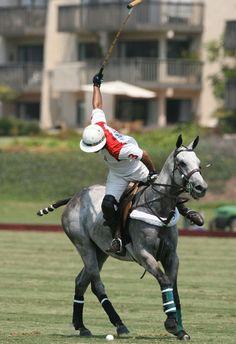 ♂ Polo Sport horse