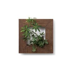 my gallery S Basic Design マイギャラリー S ベーシックデザイン - ピアンタ×スタンツァのインテリアグリーン通販 | リグナ東京
