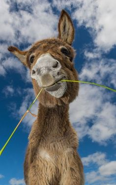 I love my Master Carol Nature Animals, Farm Animals, Animals And Pets, Funny Animals, Cute Animals, Cute Donkey, Mini Donkey, Most Beautiful Animals, Beautiful Horses