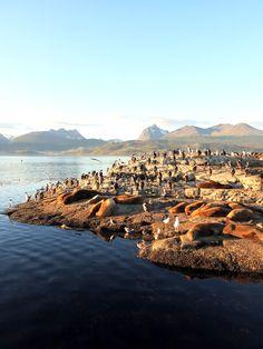 Cohabitation des cormorans et lions de mer à Ushuaia