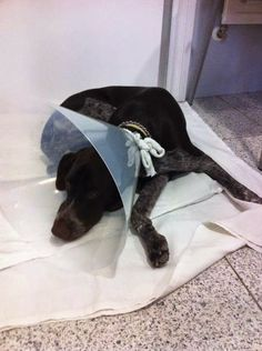 Mi perro tiene un Blog ! : Castración en perros